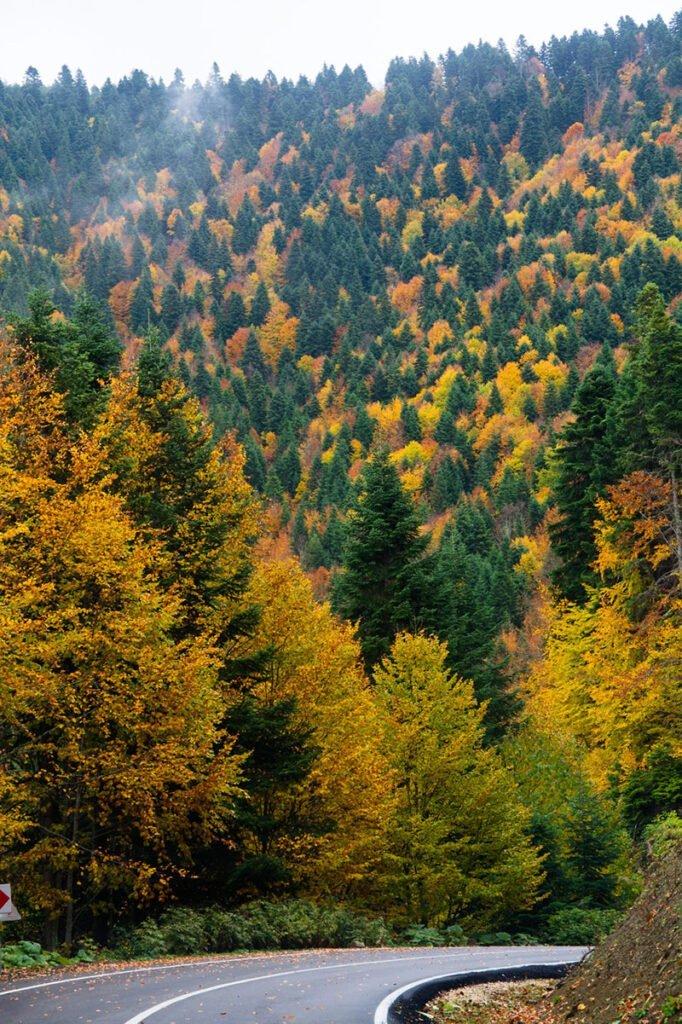 abant orman yol arayış